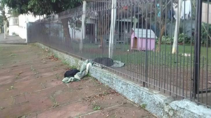 Căţeluşa vede un câine abandonat şi îşi împarte pătura cu el