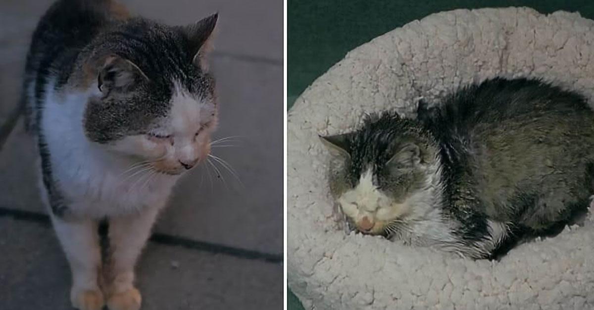O pisică bătrână care locuia pe străzi primeşte o casă călduroasă şi un culcuş confortabil