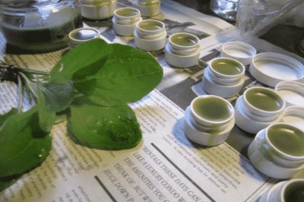Unguentul cu Patlagina – un leac care nu trebuie sa-ti lipseasca din casa – Uite cat de usor se prepara